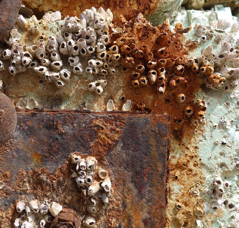 Rusty material VIII