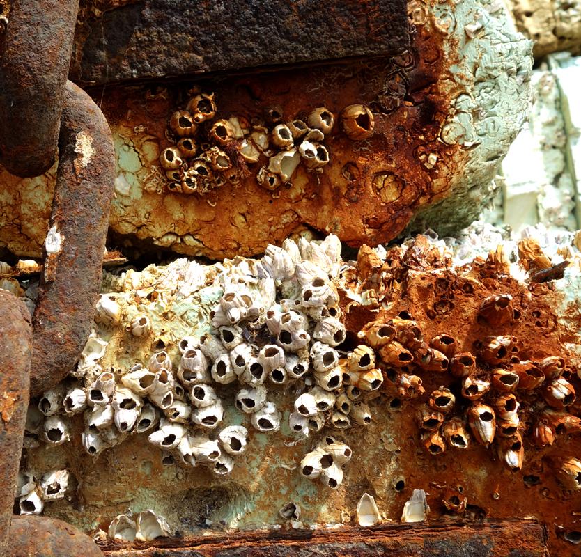 Rusty material XVI