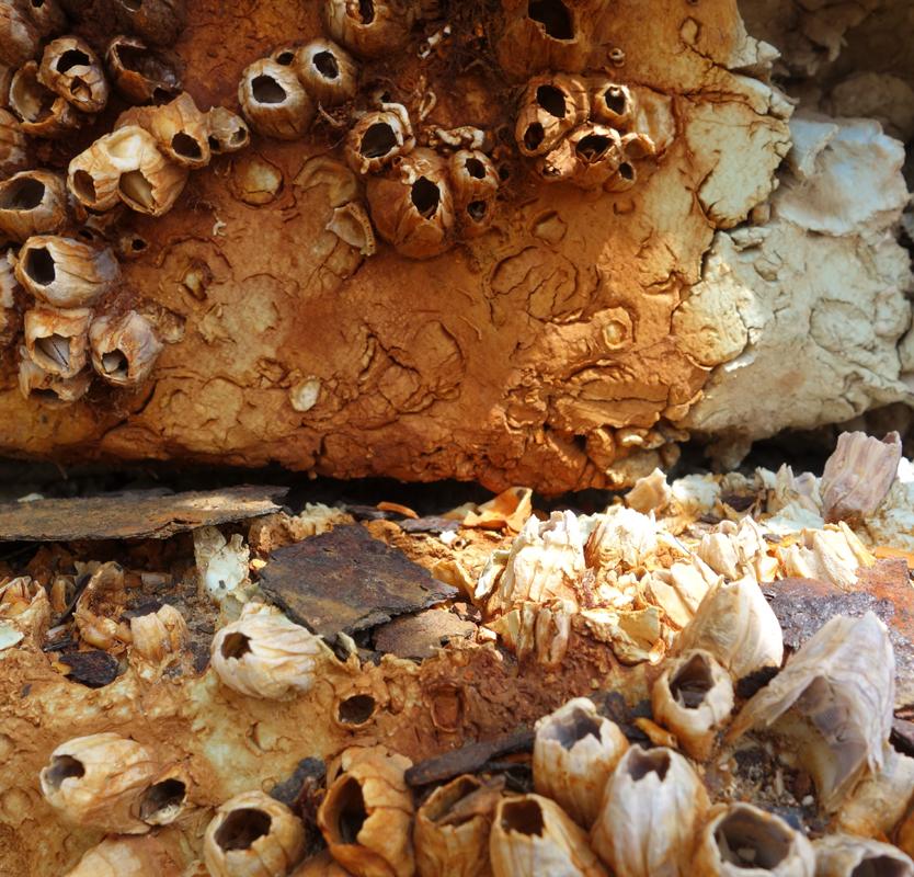 Rusty material XVII